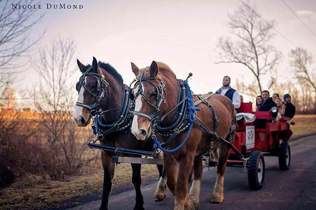 rich dumond will be hosting belgian horse drawn wagon rides again this year at the tree farm weather permitting he will be here on saturday sunday