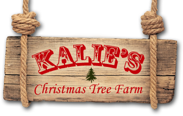 Kalie's Christmas Tree Farm | Shickshinny PA 18655